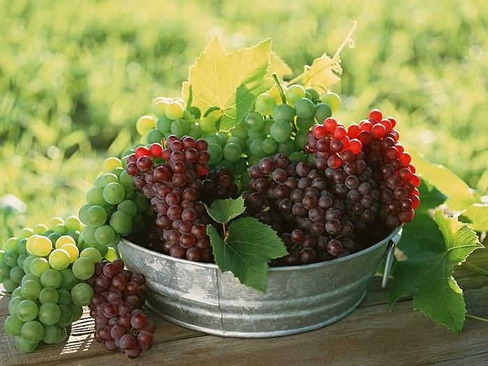 Блюда с виноградом, рецепты с виноградом, Оригинальные блюда с виноградом