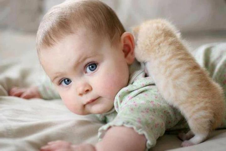 дети и животные, нужно ли заводить котенка, если ребенок просит котенка