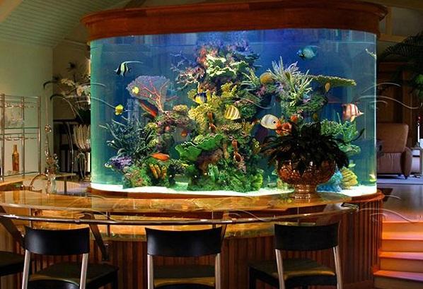 аквариум польза, зачем нужен аквариум