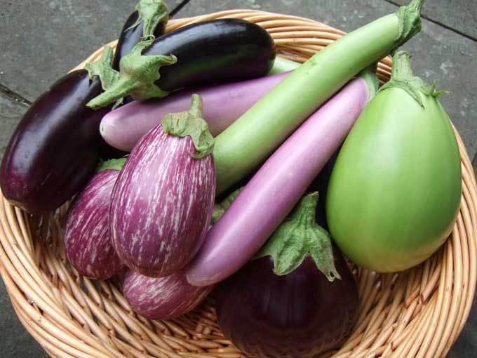 блюда из баклажанов рецепты, что приготовить из баклажанов