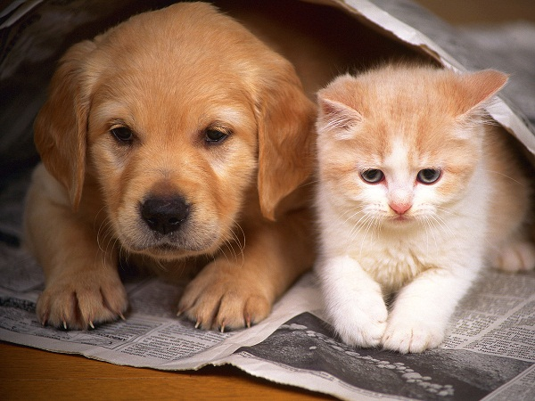 лучше собака или кошка