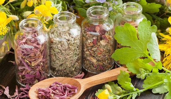 лекарственные растения польза