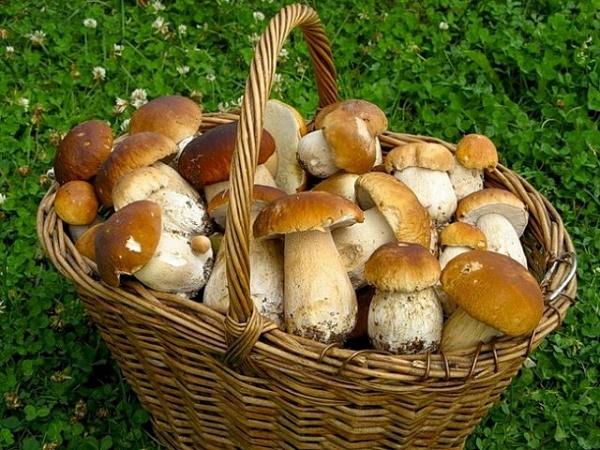 Все буде смачно, все буде смачно грибы, грибной пирог рецепт,